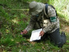 植物調査状況(フロラ調査)