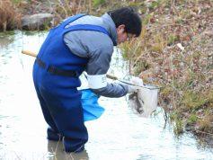 魚類調査状況(タモ網による任意採集)