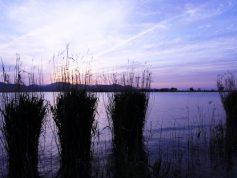 西の湖 夕暮れ 5月(非掲載写真)