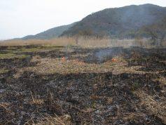 ヨシ焼き 4月(P6)